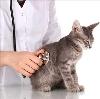 Ветеринарные клиники в Медыни